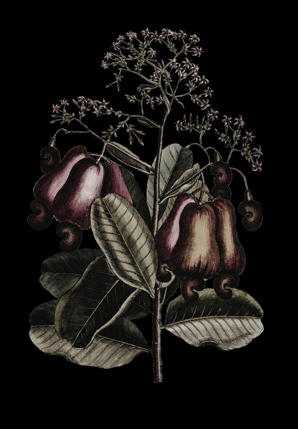 ARTISAN PLANT BASED CHEESE -