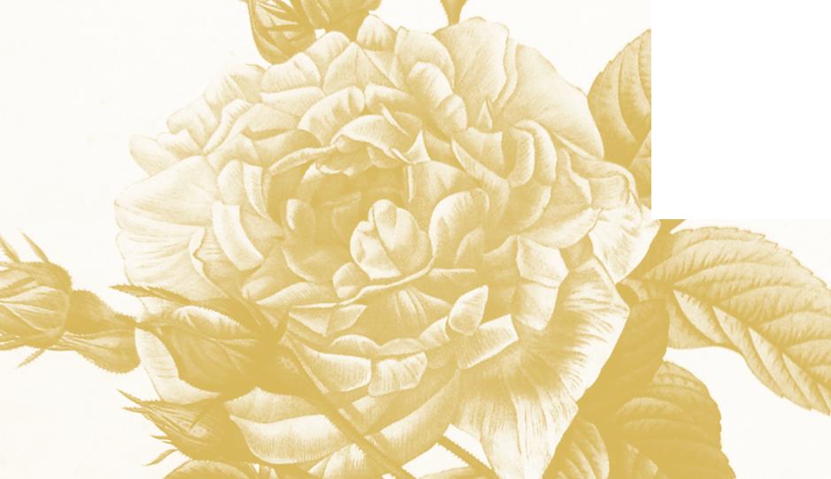 AA_Wedding_Bridge.png