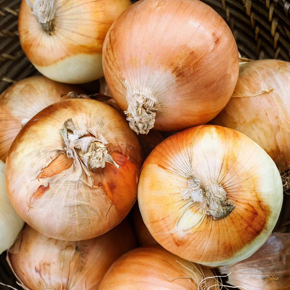 Onions At The Market - Luxy Farm - Ottawa Farmers' Market, Lansdowne Park - photo by Irene Tobis