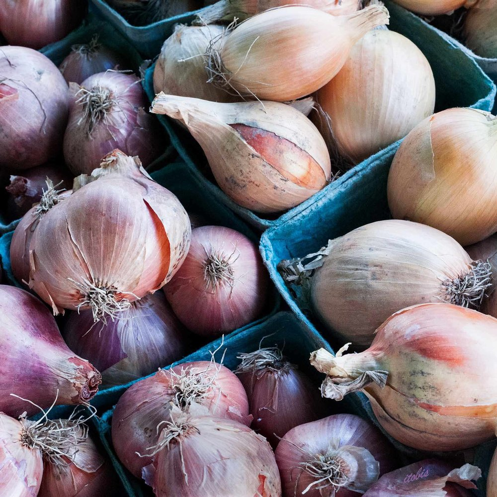 KITCHEN PHOTO BOARD : Shallots at the Market - Waratah Downs Organic Farm - Ottawa Farmers' Market, Lansdowne Park - photo by Irene Tobis