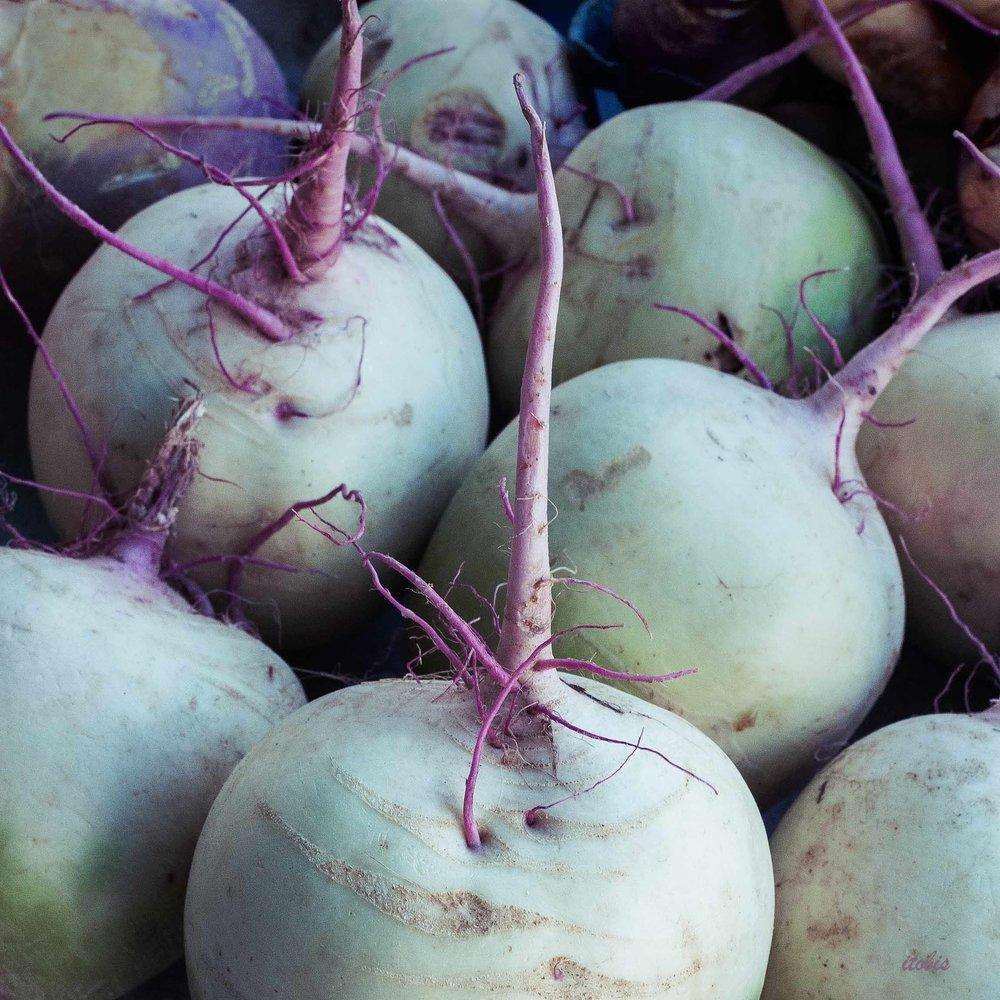 Watermelon Radishes - Waratah Downs Organic Farm - Ottawa Farmers' Market, Lansdowne Park - photo by Irene Tobis