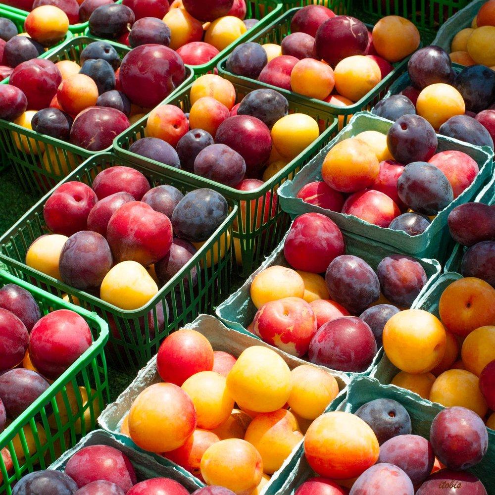 KITCHEN PHOTO BOARD : Plum Baskets at the Market - Warner's Farm - Ottawa Farmers' Market, Lansdowne Park - photo by Irene Tobis