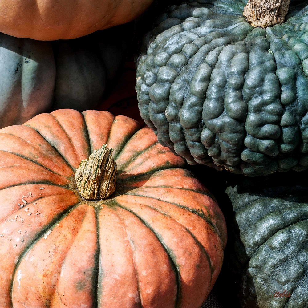 KITCHEN PHOTO BOARD: Thanksgiving at the Market - Bramble Lea Farm - Beechwood Farmers' Market - Ottawa, Ontario - photo by Irene Tobis