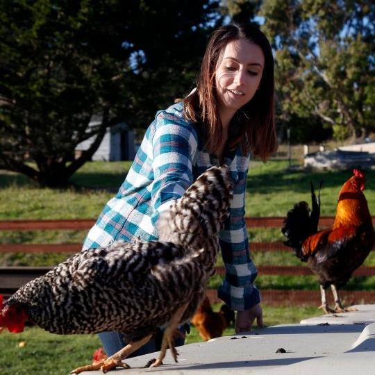 CBS SF Bay Area    Sweet Farm Co-Founders on Bay Area Focus