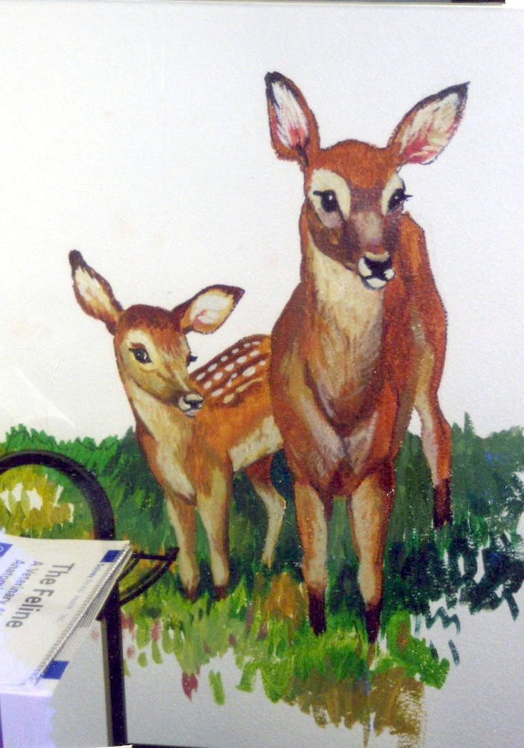 vet_deer.jpg