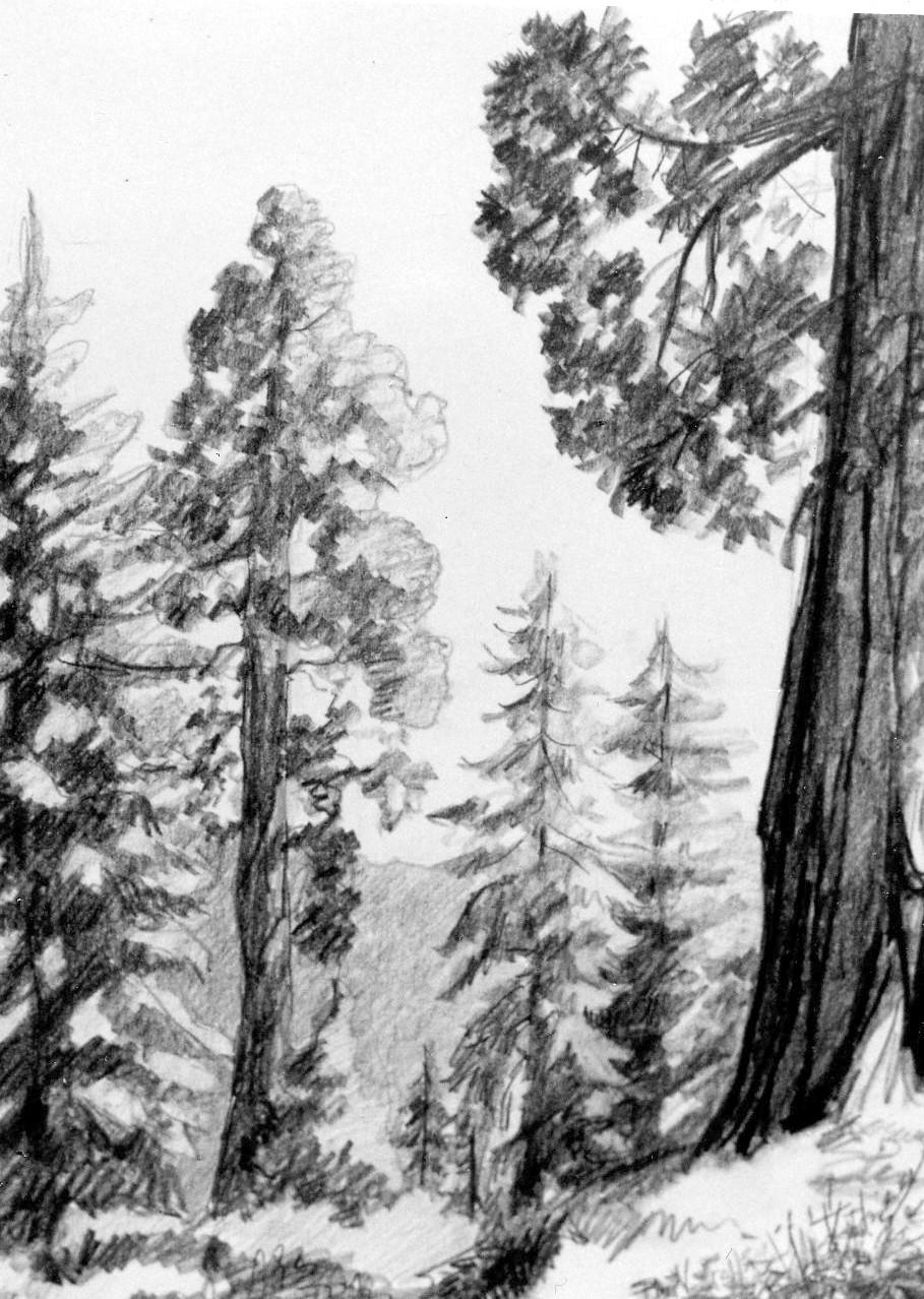 sequoias.jpg