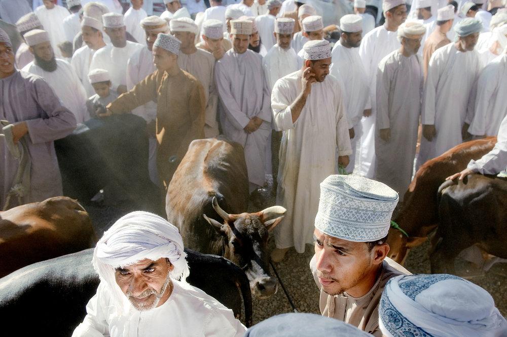 Animal market in Nizwa city - Oman
