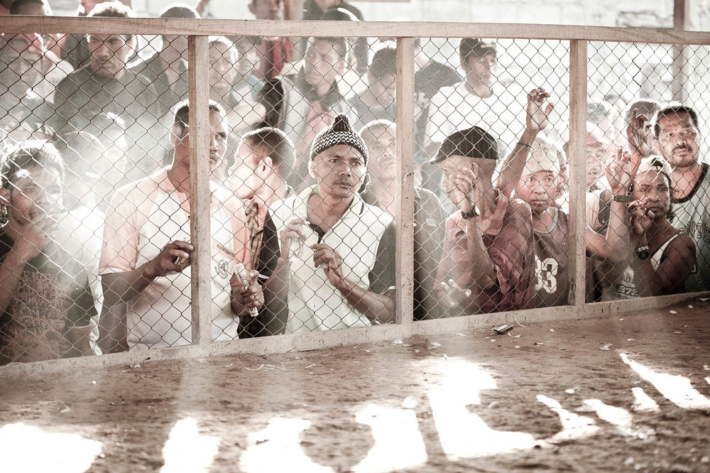 Cockfight - Timor Leste