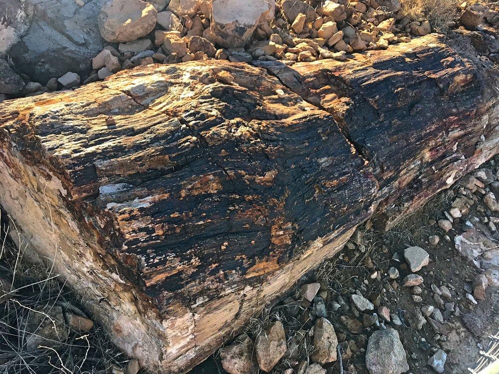 Yep. That's a log that's also a rock.