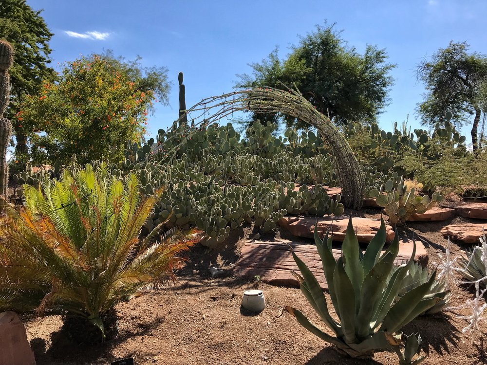 Along with cactuses the gardens feature tons of other desert plants like this agave.