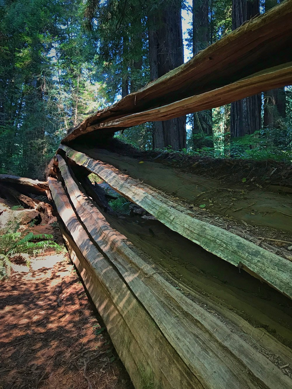 For some reason when this tree fell it split into these layers of planks.