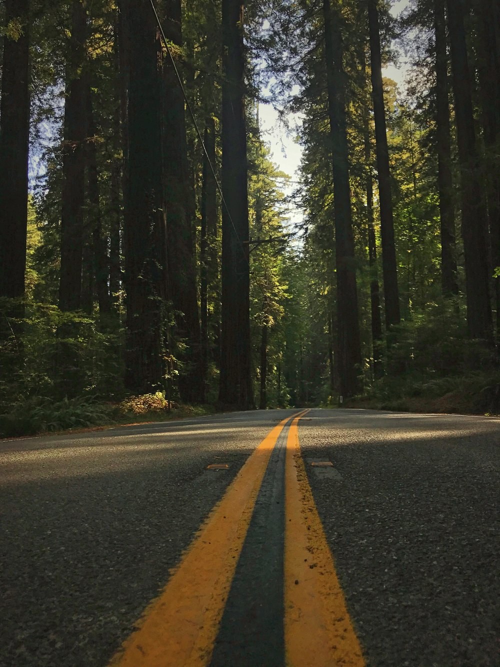 The Avenue of Giants is definitely a classic road trip experience.