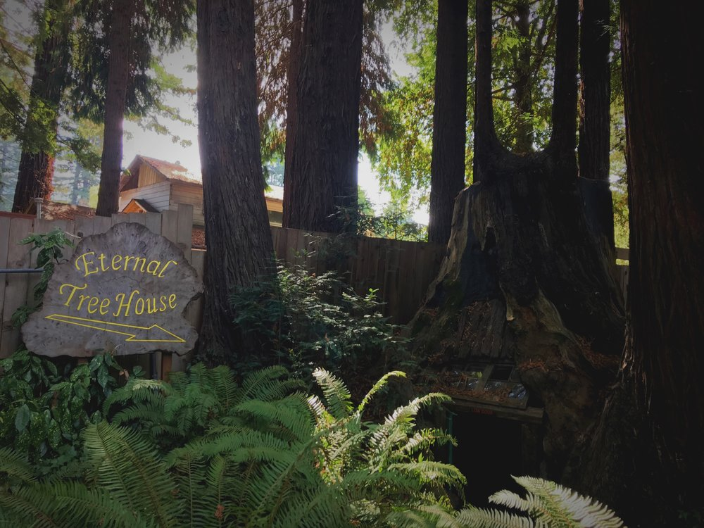 The Eternal Tree House is tucked behind a little gift shop along the Avenue of the Giants.