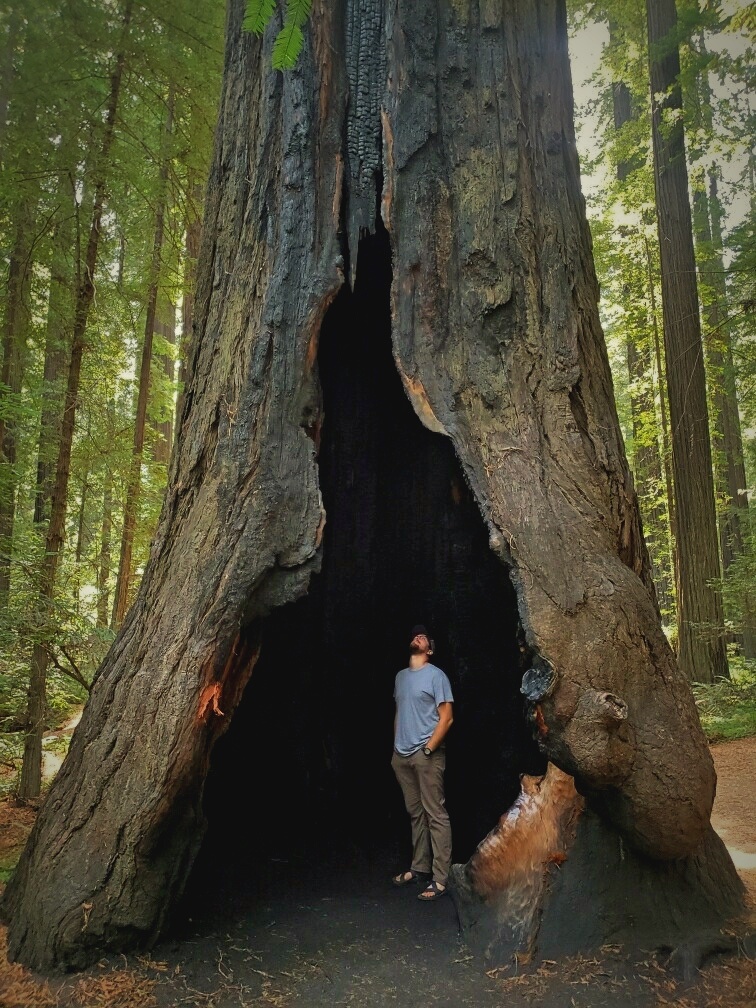 IanstandinginaHollowRedwood.jpg