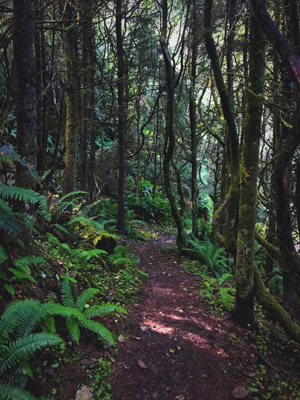 The trail down to the Cape Meares Beach is a green tunnel in many places.