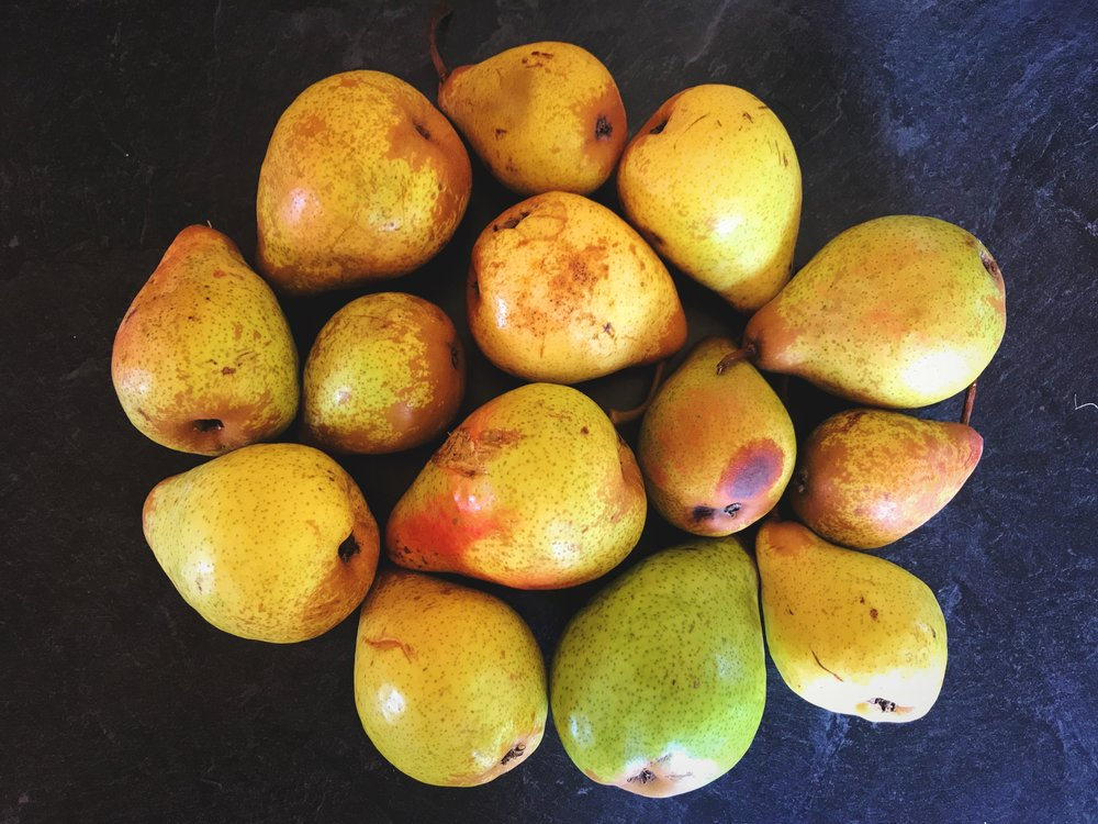 We found a bunch of ripe yellow pears along the trail. They were a bit bruised so we poached them.