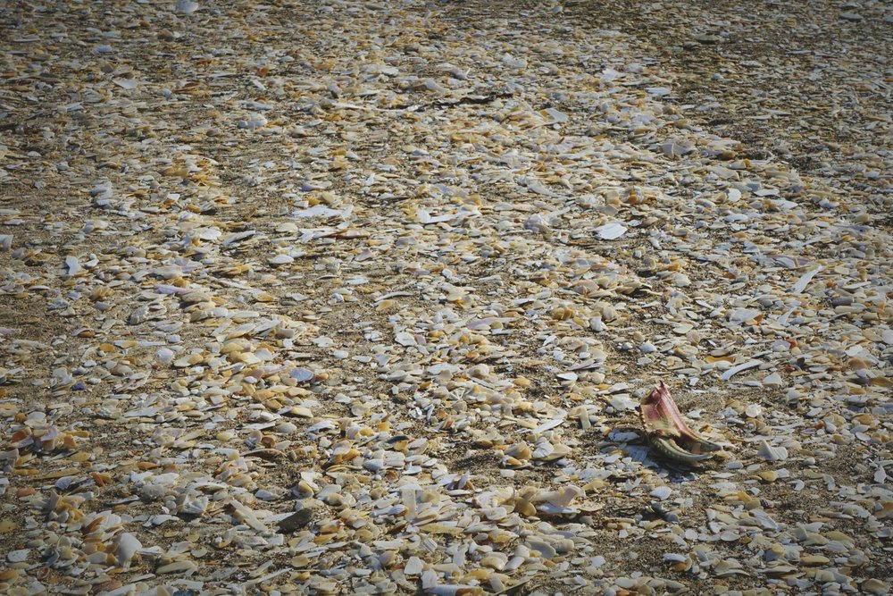 There are areas of the beach that are totally covered with broken shells.