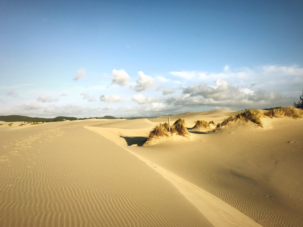 As the day wore on, and the shadows lengthened, the Oregon Dunes only became more dramatic.