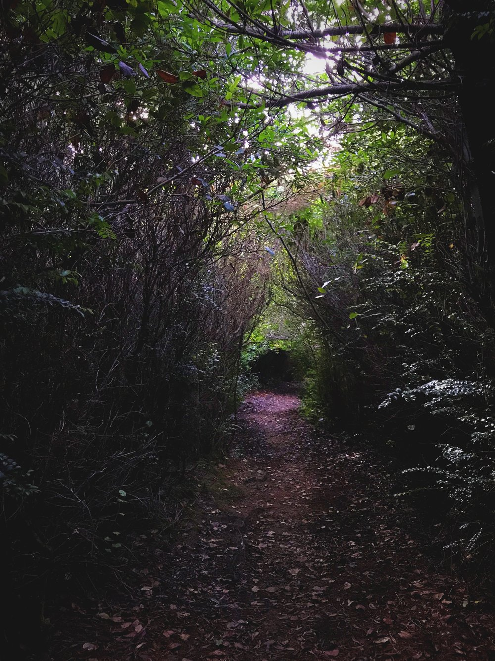 In some places the trees are so dense the trail is a tunnel.