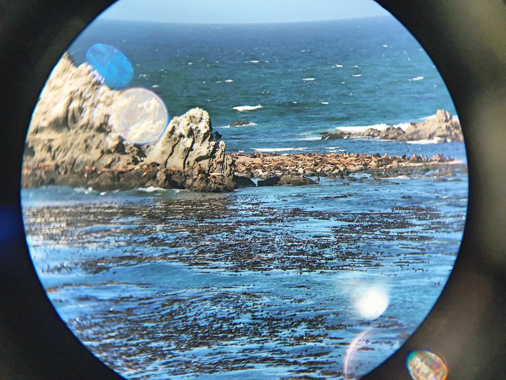 Don't forget to bring your  binoculars  so you can get a view of the sea lions and seals on Simpson Reef.