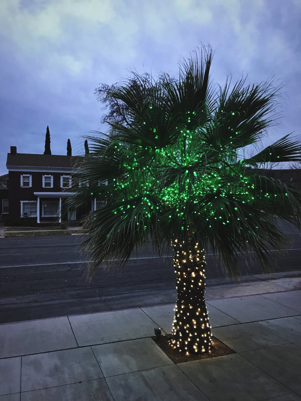 I won five dollars by submitting this photo of a decorated palm tree. It took 15 seconds.