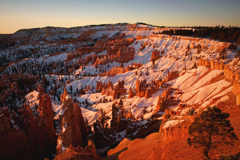 The sunrise projects a rosy light on the snow of Bryce Amphitheater.