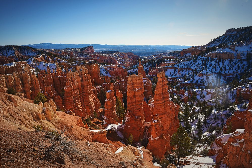 The hoodoos in Fairyland are less eroded than those in Bryce Amphitheater so they are more bulbous.