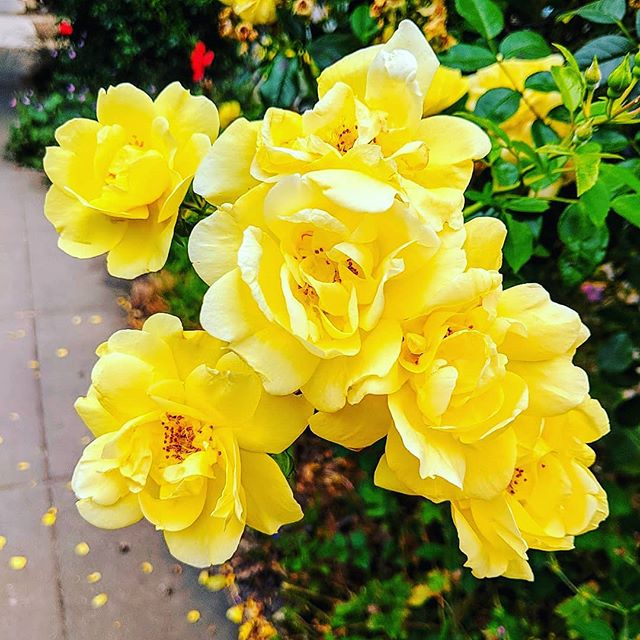 surround yourself with people who allow you to blossom 💛• • • • • • • #portland #pdx #flowers #yellow #beauty #floral #positivevibes #blossom #bloom #nature #naturephotography #naturelovers #flowerlovers #pnw #oregon