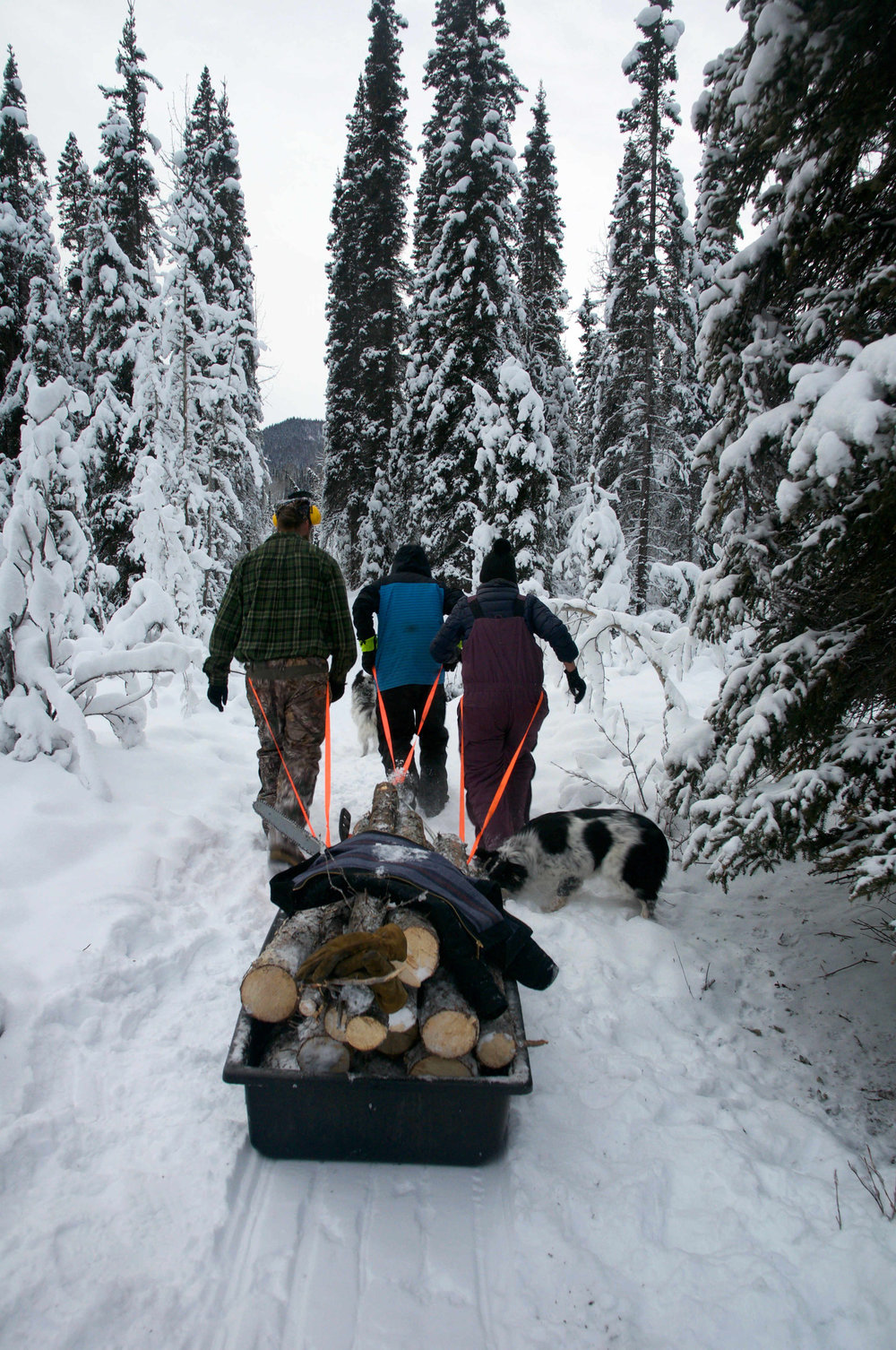Ali Towers, Scott Anthony and their friend Isaac Hinckley pulling their logging sled after cutting down a tree.
