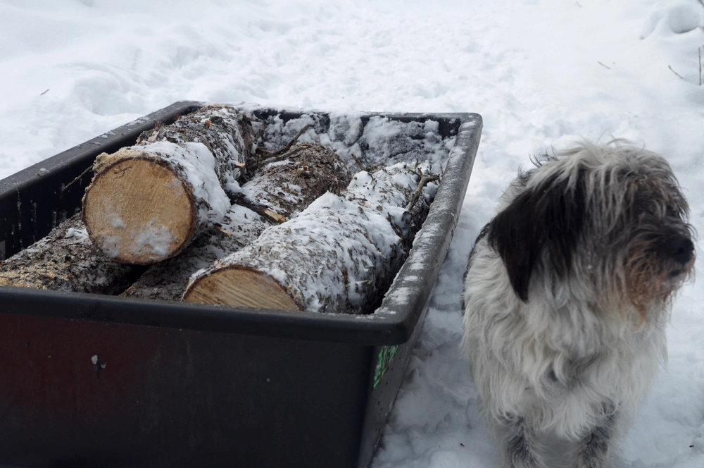 "Scott Anthony's dog ""Hobo Joe"" guarding their firewood."