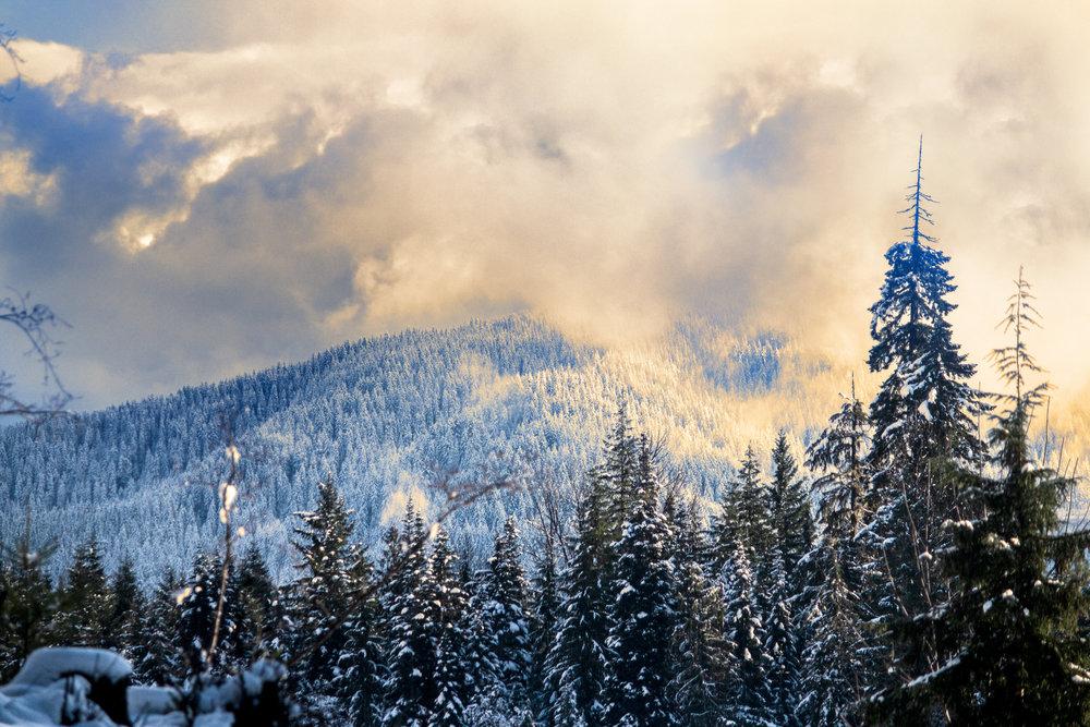 Winter-Landscape-Trees-Saved-for-Web-ajio.jpg