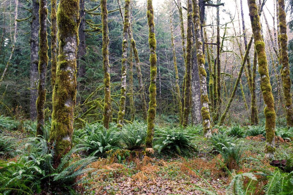 Tree-Fern-Saved-for-Web-aeuek.jpg