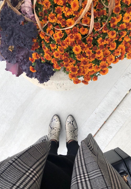 fall #13.jpg