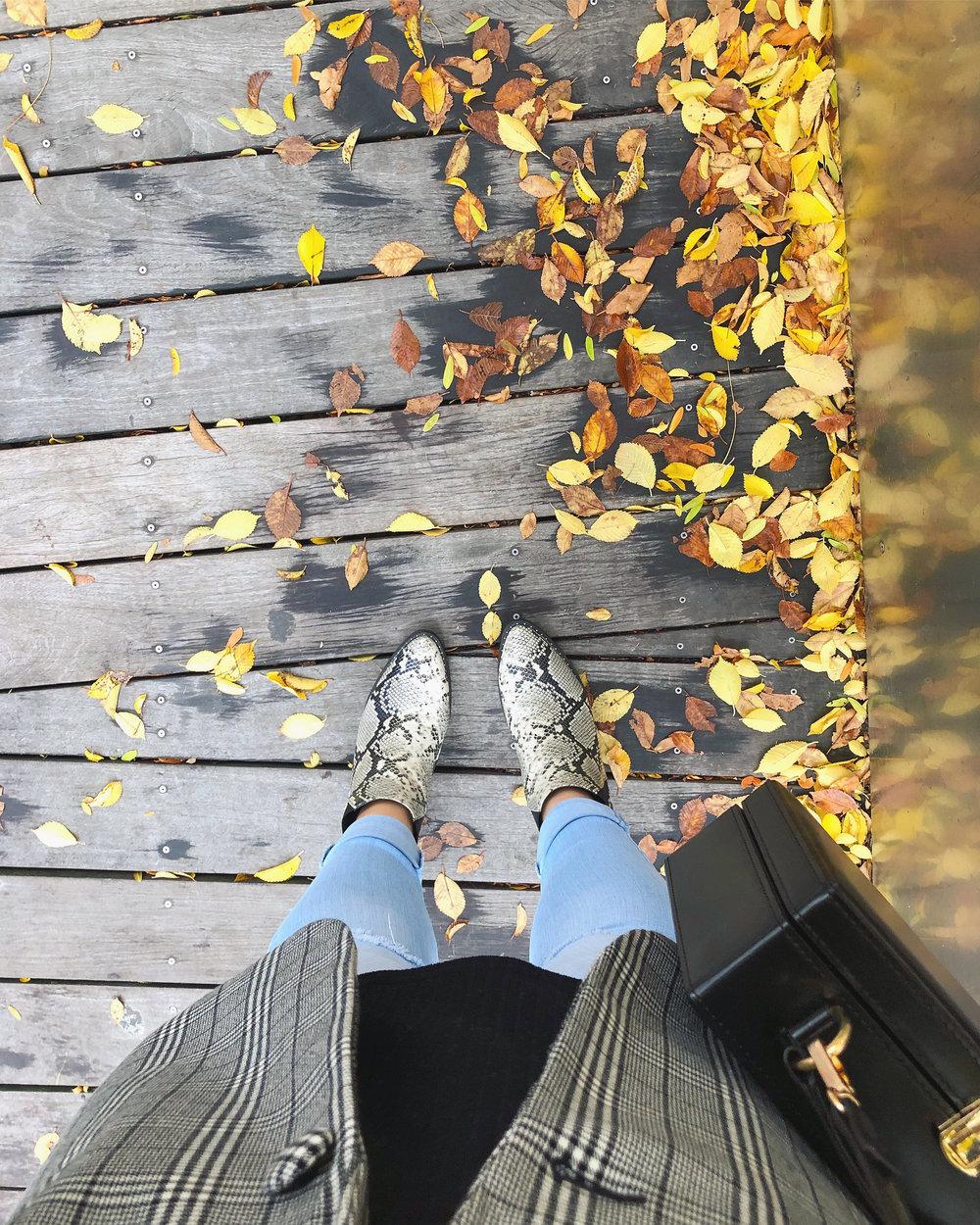 fall #12.jpg