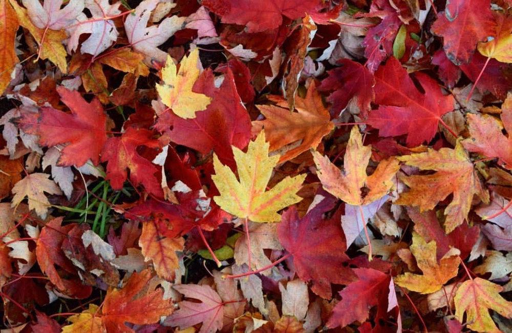 fall #44.jpg
