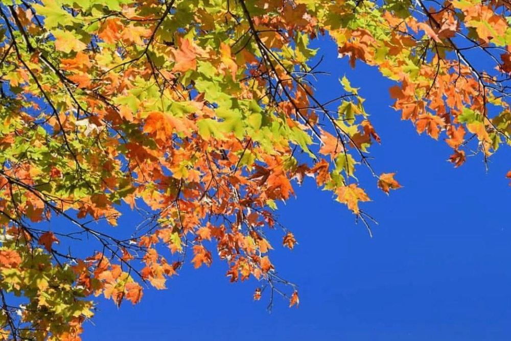 fall #51.jpg