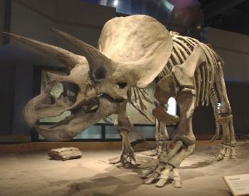 Bone Wars.jpg