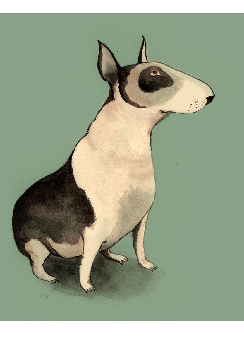 _0005_Zosienka_English-Bull-Terrier.jpg