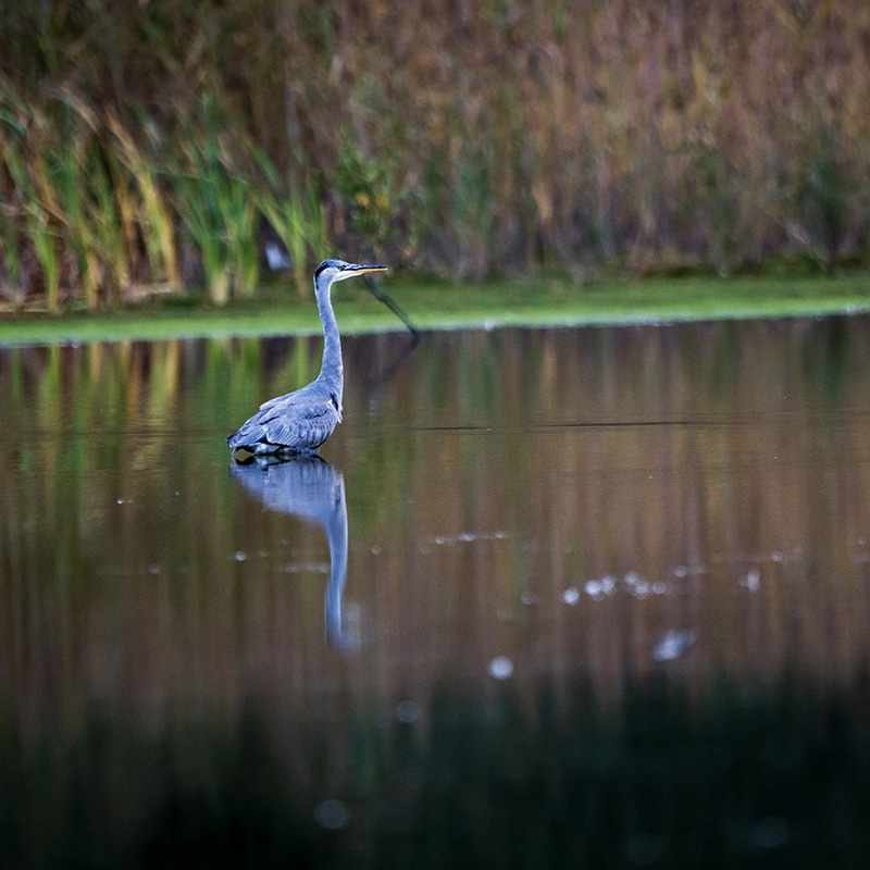 WILDLIFE WORKSHOP AT BROCKHOLES    In October Jeff Carter was invited by Wilkinson Cameras to host a wildlife photography workshop for 12 people at Brockholes Nature Reserve near Preston