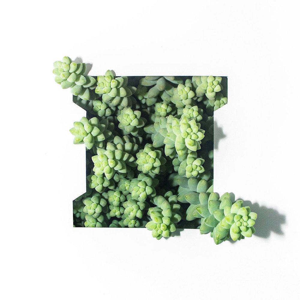 I - Ingekaderde vetplant