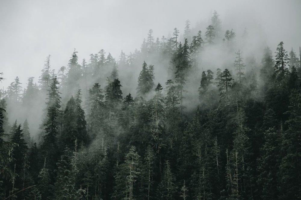 príroda -