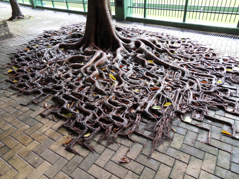 Tree_growing_on_pavement_in_Hong_Kong.jpg
