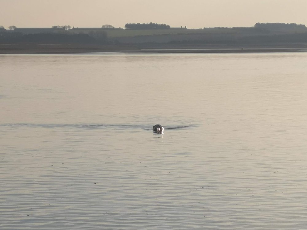 Being followed by seals (that refused to stay still long enough for a decent photo).