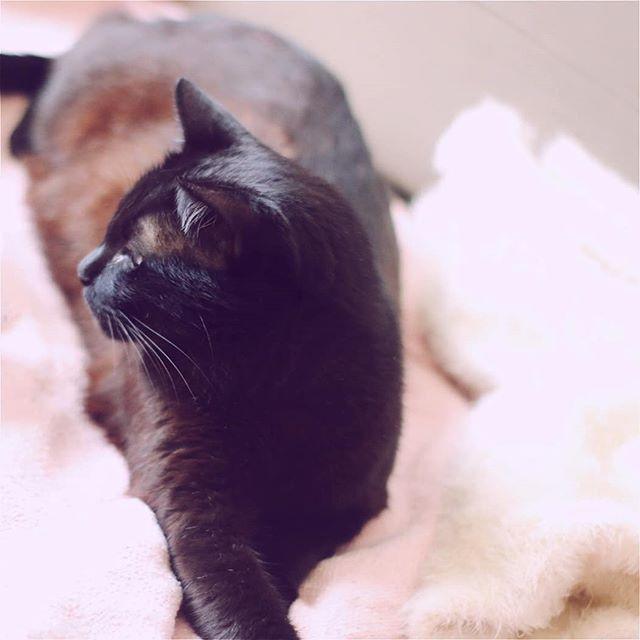 O gatinho mais abalador de corações 🐱🐈😻 #LordeSpookyGomesMaia #Blackcat #catsofinstagram #gatopreto #adotenaocompre