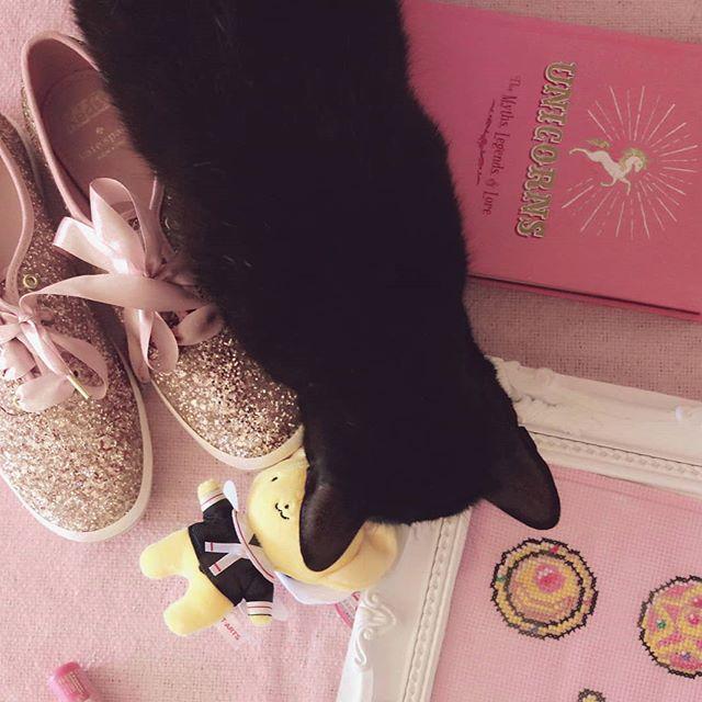 Tentando fazer um flatlay quando você tem gatos: uma Odisséia. 🐈🐱 #crazycatlady #adotenaocompre #catsofinstagram #Blackcat #gatopreto #kawaii
