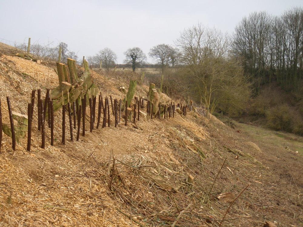 Hedge planting - Warwickshire