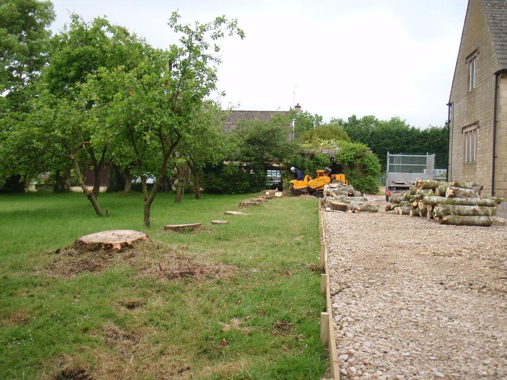 Poplar dismantling - Lavender Hill, Naunton, Gloucestershire-2