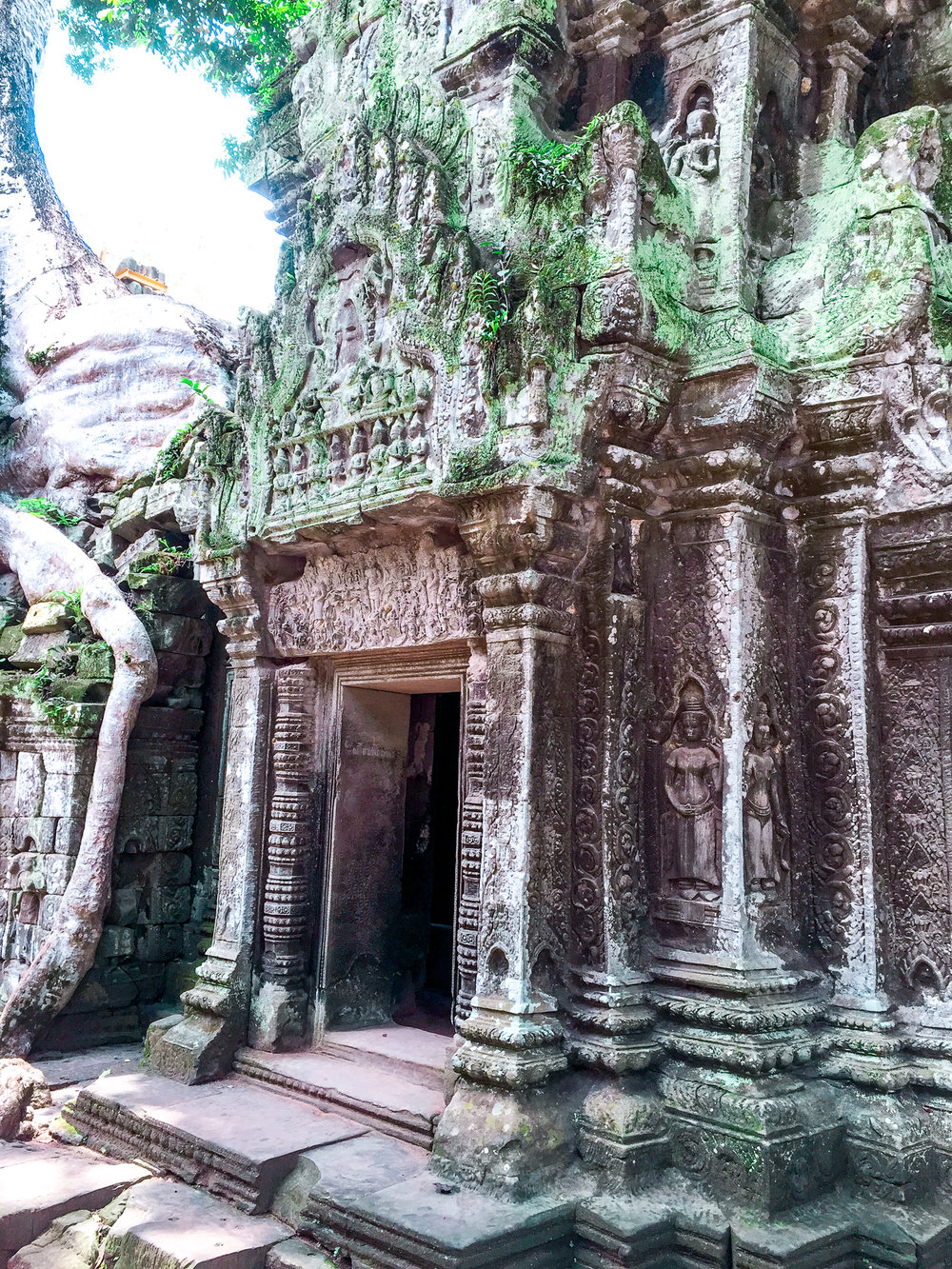 Cambodia Siem Reap, Ta Prom Temple  (laura Croft and the Tomb Raider Movie) August 2015 Tyrannosaurus Rex (17).jpg