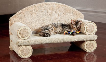 Got a lazy cat? - Myko asked me to upgrade her current cardboard couch this year. So this is what I'm getting her cause she's fancy now.