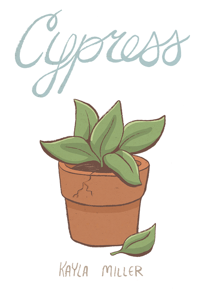 Copy of Cypress